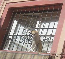 Harry Houdini's Dog? by Stronsy
