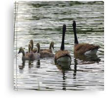 Goose Family Morning Canvas Print