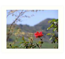 Wild Rose of California Art Print