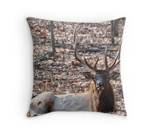 Lone Elk new edition for over 60 group Throw Pillow