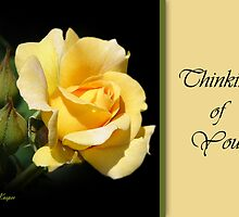 Thinking of You - Yellow Rose by Sheryl Kasper