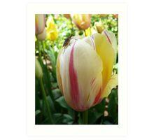 Tiptoe on the Tulip Art Print