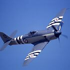 Sea Fury @ Brisbane Airshow, Queensland, Australia 2003 by muz2142