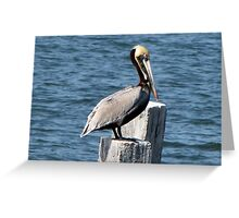 Pelican, Perched Greeting Card