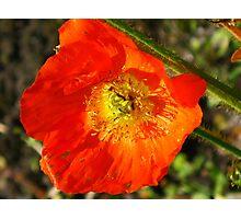 Nature 23 Photographic Print