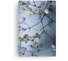 Gypsophila and Shadows Canvas Print