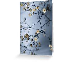 Gypsophila and Shadows Greeting Card
