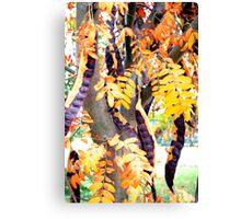 Bean Tree Canvas Print