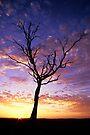 Waratah North Sunset by Travis Easton