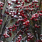 A Merry Christmas to All! by Marilyn Harris