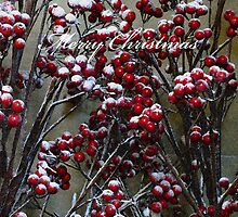 Merry Christmas - Snow covered Red Berries  by Marilyn Harris