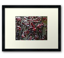 Merry Christmas - Snow covered Red Berries  Framed Print
