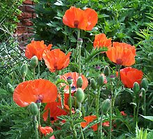 Garden of Poppies by LoneAngel