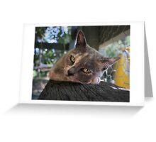 Bella the burmese beauty Greeting Card