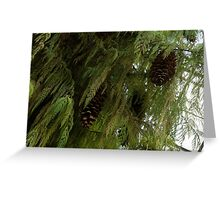 High Key Christmas Greenery With Giant Sugar Pine Cones Greeting Card
