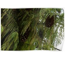 High Key Christmas Greenery With Giant Sugar Pine Cones Poster
