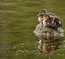 Mount Duckling - Ottawa, Ontario by Michael Cummings