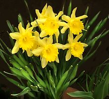 Daffodills again, another bunch by Corinne Noon