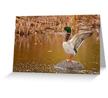 Wing Stretch Greeting Card