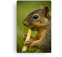 Squirrel Eating a French Fry Canvas Print