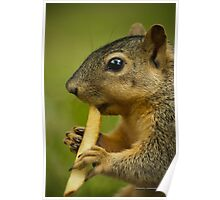 Squirrel Eating a French Fry Poster