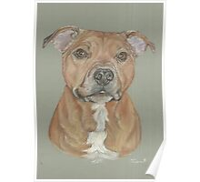 Terrier portrait in pastel Poster