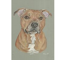 Terrier portrait in pastel Photographic Print