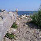 Coastal NH 3 by Christine Frydenborg Dargon