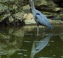 Great Blue Heron by BLaskowsky