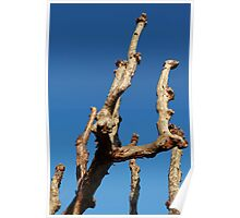 natural wood sculpture Poster