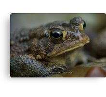 Toad in the Rain Canvas Print