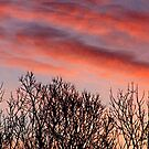 winter sunset by donald beynon