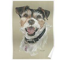 Terrier portrait Poster