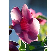 flower in the morning sun - flor en la luz de la mañana Photographic Print