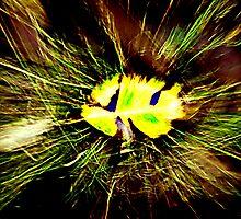 Leaf in Blur by Peter Evans