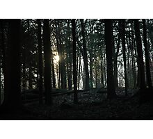 Secret in the Woods lV Photographic Print