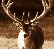Stag Deer by InterestingImag