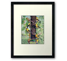Finch Cuisine  Framed Print