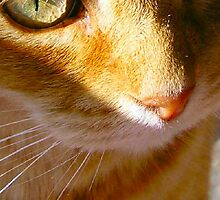 Ginger Eyes by allysan