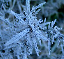Cold pins and needles by Andrew Carruthers