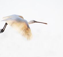 Spoonbill In Flight by HIZOOM