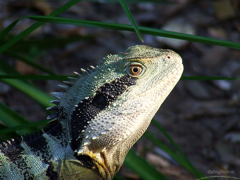 Eastern Water Dragon... by debsphotos