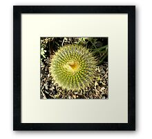 Pin Cushion Framed Print