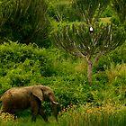 herbivore vs carnivore by melmac