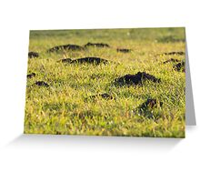 Mole Hills in the Grass Greeting Card