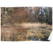 Winter Floodplain Forest Poster