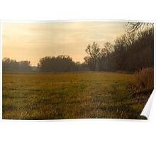 On the Edge of a Floodplain Forest Poster