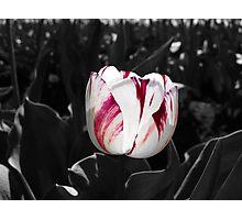 First Blush Photographic Print