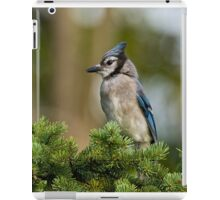 Blue Jay in Spruce Tree - Ottawa, Ontario iPad Case/Skin