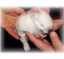 Gentle Hands Precious Bunny by Jonice